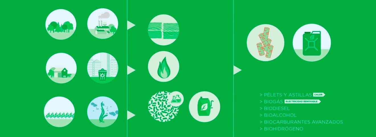 transformación de las biomasas
